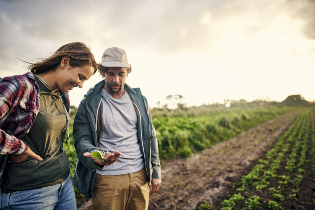 Shot of a young man and woman picking organically grown vegetables on a farm